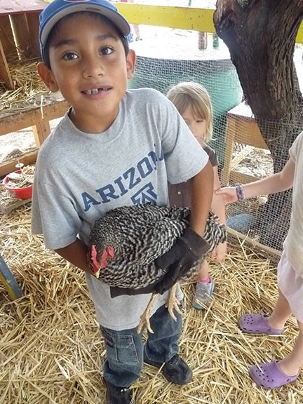 Child holding a spotted chicken