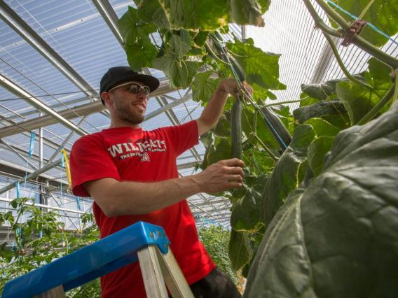 Student on ladder working in greenhouse
